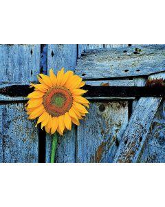 Blume als Zeichen