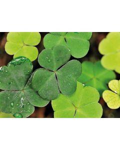 Grünes Glück