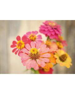 Blumenwunsch