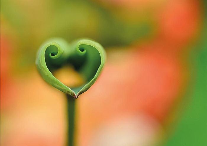 Textkarte - Grünes Herz